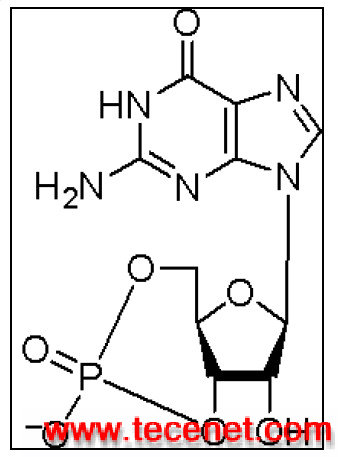 cGMP_Non-acetylated