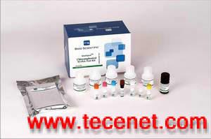 氯霉素残留检测试剂盒
