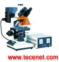三目荧光显微镜(实验型)