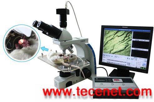 医学图像分析系统