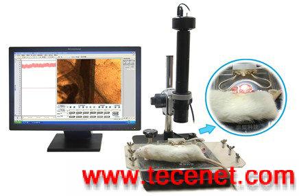 微循环观测实验系统