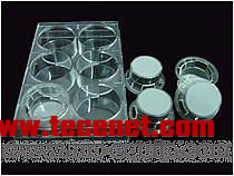 培养瓶/板/皿、共培养、光学分析、成像