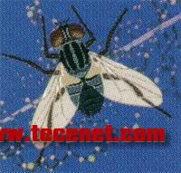 果蝇基因组芯片