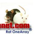 华联OneArray大鼠表达谱芯片(ROA)