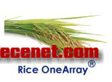 华联OneArray水稻表达谱芯片(RiOA)