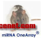 华联小鼠大鼠miRNA OneArray芯片