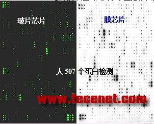生物素标记抗体芯片