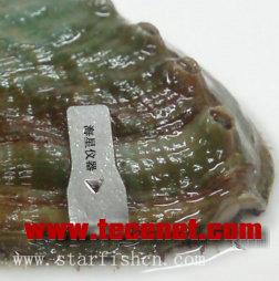 鲍鱼标记贝类夹式标记