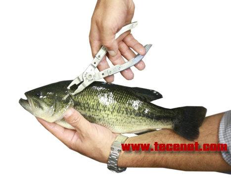 PER穿孔鱼类标记