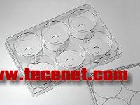 6孔玻底培养板