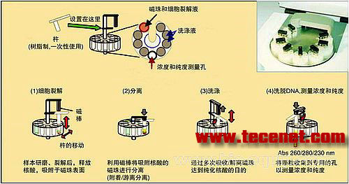 全自动核酸处理系统业界内第一款