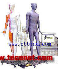 针灸穴位模型|人体针灸穴位发光模型