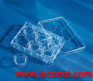 Transwell  -Clear Polyester Membrane InsertPET膜细胞培养插入皿