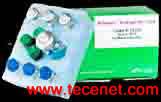 Glycosan 水凝胶