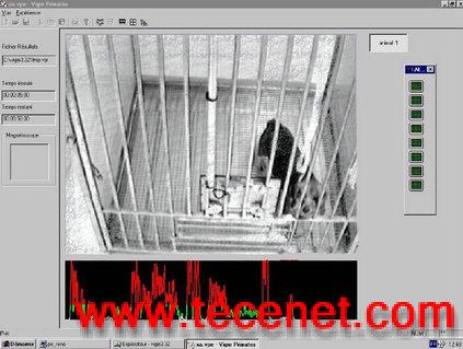 猴子行为分析系统-VigiPrimates