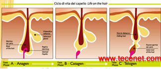 意大利原装进口 iPl 强脉光肤嫩子