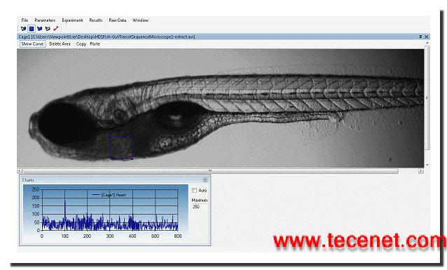 斑马鱼心跳血流观测软件-μZebraLab
