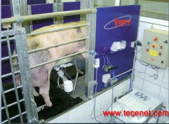 猪精液自动採精设备
