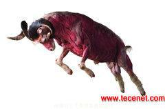 动物解剖标本