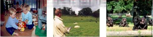 动物行为观察分析系统