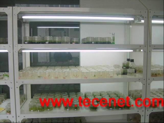 组培架 培养架 植物组培架 光照培养架