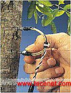 TDP茎流传感器