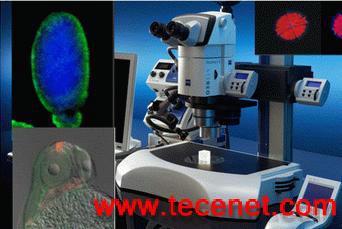 蔡司体视荧光显微镜Stereo Lumar V12
