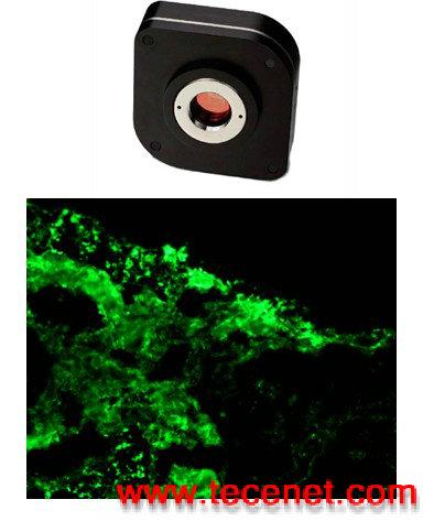 科学级RGB彩色相机