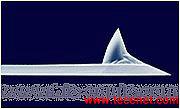 原子力显微镜探针(BS接触探针)
