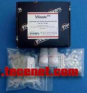 胞浆和胞核蛋白抽提试剂盒