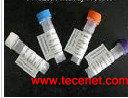 氟诺酮抗体