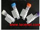 鸡新城疫病毒抗体检测试剂盒