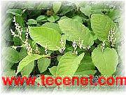 白藜芦醇/大豆甙/对香豆酸标准品对照品
