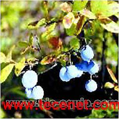 熊果酸/喜树碱/辛弗林标准品对照品