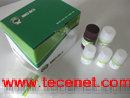 血液基因组96孔板提取试剂盒