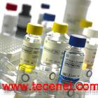 GeneScan DNA提取试剂盒