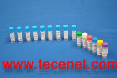 鼠抗甲型副伤寒单克隆抗体