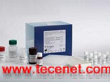 组织因子 ELISA试剂盒