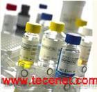 磷脂酸磷酸酶2C抗体