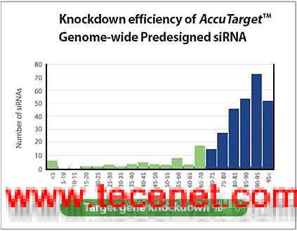 预设计的siRNA合成