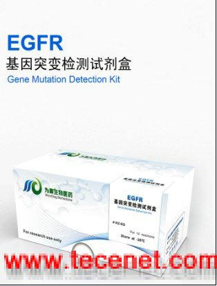 EGFR基因突变检测试剂盒