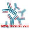 胰酶100ML