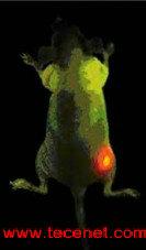 纳米荧光探针