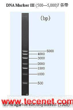 DNA  Marker III